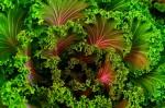 6 Salad-Free Ways to Enjoy Your Greens