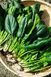 spinach in basket