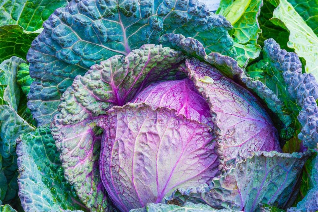 cabbage-1078163_1280